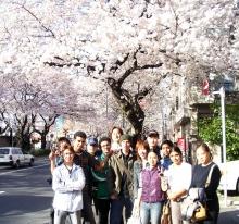 中野通り・桜.-1